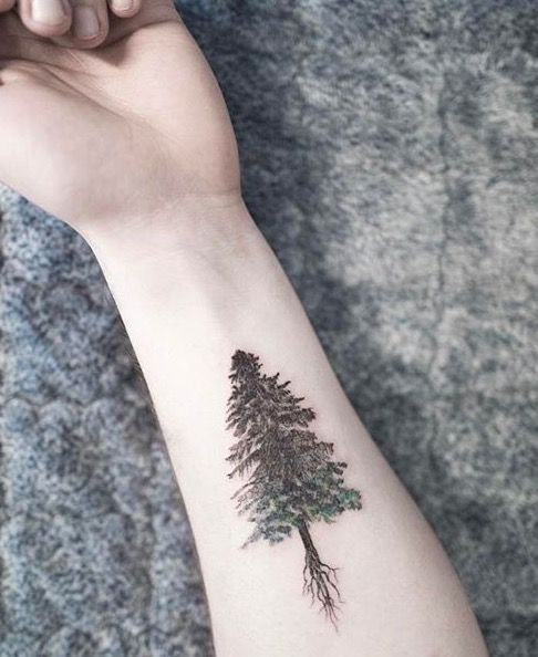 30 Refreshing Evergreen Tree Tattoo Designs | Amazing ...