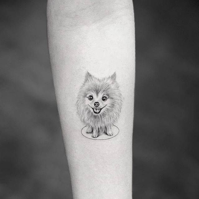 Single Needle Pomeranian Forearm Tattoo
